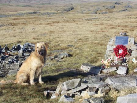 Dog Friendly holiday in Brecon Beacons, Wales - Craig y Nos Mountain Plane Wreck