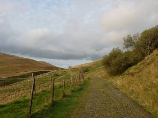 Dog friendly Wales - Mountain Tracks Penwyllt Dog Walk