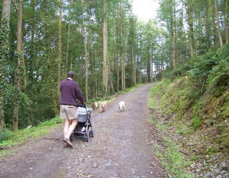 Dog Friendly B&B Wales - a dog's visit to Talley Abbey