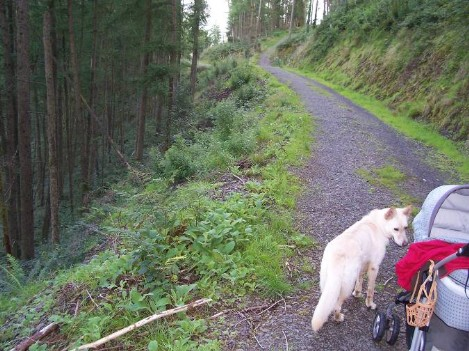 Dog Friendly B&B Wales - a dog's visit to Talley Abbey and dog walk on Talley Forest paths