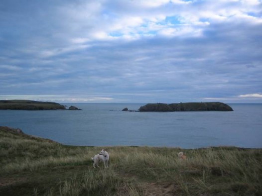 Dog Friendly B&B Wales - a dog's day out in Tenby looking out to sea