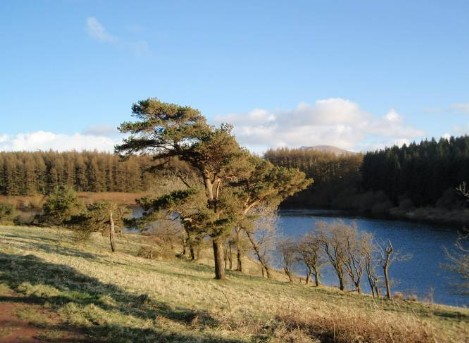 Dog friendly B&B Wales - Usk Reservoir Dog Walk