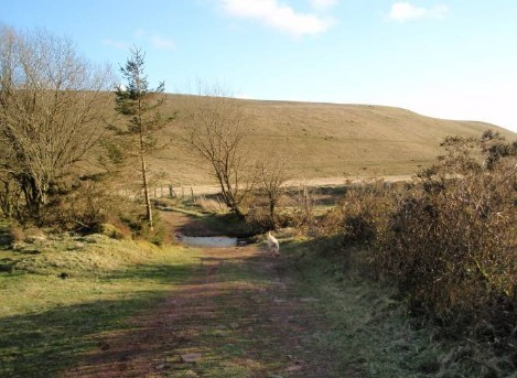 Dog friendly B&B Wales - Usk Reservoir Circular dog Walking tracks