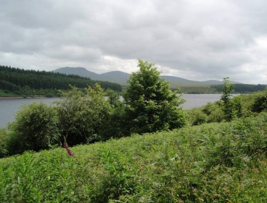 Dog friendly B&B Wales - Usk Reservoir dog Walk Brecon Beacons Mountains in background