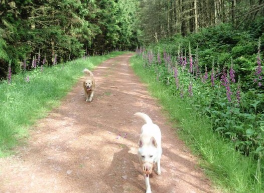 Dog friendly B&B Wales - Usk Reservoir circular dog Walk