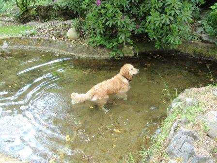 Dog Friendly holidays in Wales - Craig y Nos Castle Swimming Pool (dogs)